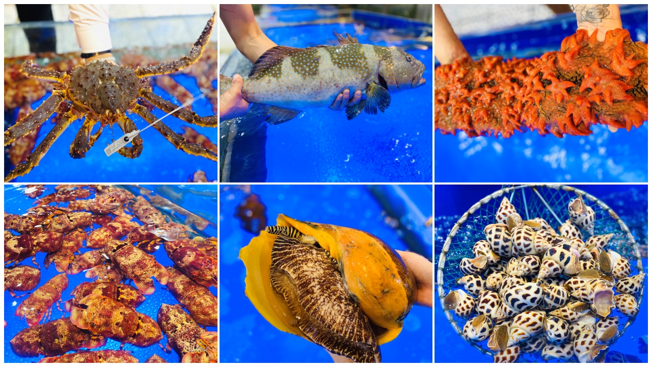 Lạc lối với thiên đường hải sản Đà Nẵng 'tươi ngon khó cưỡng' | 4U Biển